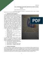 32-Anatomia II-07.03.2016-Topografia Toracocardiaca, Componenti Vascolari e Nervose Del Cuore e Sistema Azygos