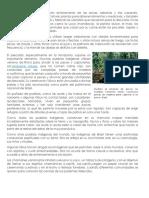 BRASILLa Mayoría de Las Tribus Viven Enteramente de Las Selvas