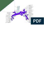 Anatomia arterie polmonari