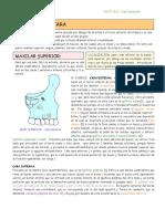 ESQUELETO DE LA CARA.pdf