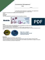 Estructura o microorganismo.docx