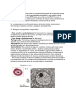 NUCLEOLO y Cromatina