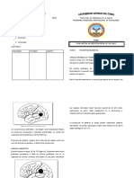 Neuropsicologia II