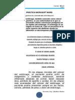 Práctica Microsoft Word Nº 04
