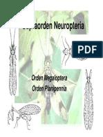 ENTOMO Hymenoptera Clase 14 - 2009