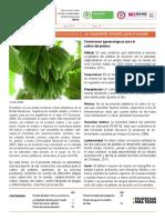 Proceso de Produccion Del Platano