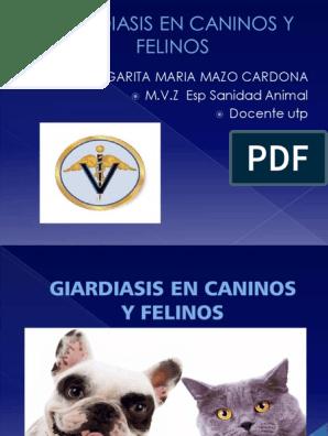 giardiasis en perros tratamiento pdf