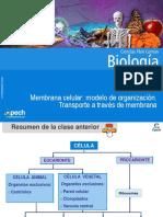 Clase 7 Membrana celular modelo de organización.Transporte a través de membrana copia
