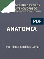 Anatomía Semana 3 - UPAO