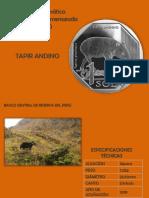 Tapir Andino Presentacion