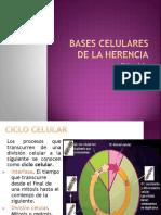 1 Expo Ciclo-celular