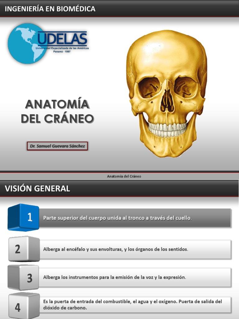 Contemporáneo Anatomía De Un Marco De La Puerta Patrón - Anatomía de ...