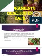 Mejoramiento-genético-en-café-expocicion.pptx