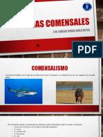 AMEBAS COMENSALES.pptx