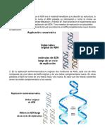 La replicación del ADN.docx