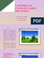 producción de planta por estaca_viveros forestales