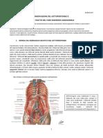 39-Anatomia II-06.04.2016-Innervazione Del Sottoperitoneo e Trattazione Del Tubo Digerente Addominale
