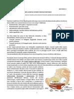 53-Anatomia-II-12.05.16-perineo-genitali-esterni-ripasso-peritoneo
