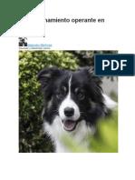 Condicionamiento Operante en Perros