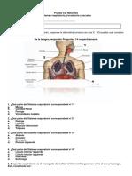 Prueba 8 Sistemas Renal Circulatorio 2018