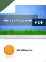 Hibrizi floarea-soarelui.pdf