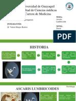 Morfología del Ascaris Lumbricoides