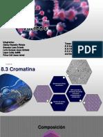 Cromatina, Cromosomas, Replicación ADN, Heterocromatina y Eucromatina