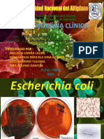 Bacteriologia Clinica