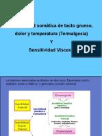 Somatosensorial2_2018 (1)