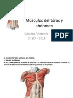 3Músculos Del Tórax y Abdomen 2018
