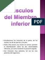 5Musculos Del Miembro Inferior 2018