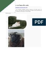 Termoizolatie cu lana de oaie.docx