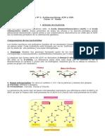 Guía 2 ADN y ARN (4° medio).doc