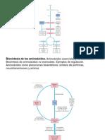 Biosintesis de Aminnoacidos