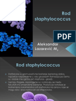 Rod Staphylococcus