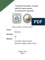INFORME-DE-Arachis-pintoi.docx