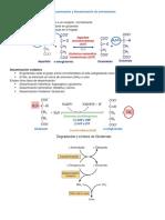 Transaminación y Desaminación de Aminoácidos