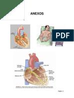 ANEXOS  Electrocardiograma
