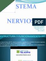estructurayfuncionamientodelsistemanervioso-121122095802-phpapp02