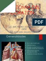 Anatomia Del Corazon Perfecto