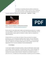 Leishmaniose Visceral.docx Para o Site