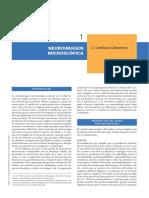 Neuroimagen microscópica