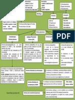 Placenta y Cambios Fisiologicos
