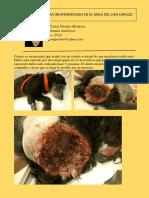 Fibrosarcoma Indiferenciado en El Anca Del Can Caruzo