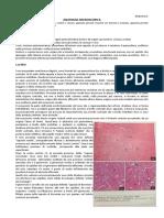52 Anatomia II 09.05.2016 Anatomia Miicroscopica Urogenitale