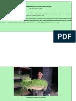 El Forraje Verde Hidropónico y Su Uso en La Crianza de Cuyes