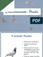 Condicionamento - Pombos