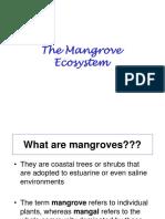 Mangrove_handout_2015-16.ppt
