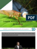 Colecta%2c Montaje y Preservación de Insectos