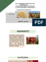 Cultivo Amaranto Bn